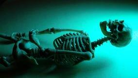 Skeleton Mini Model. Miniature Human Skeleton Model Close Upn stock video footage