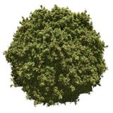Miniature leafy planet Stock Photo