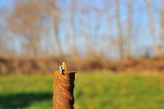 Miniature man on pole Stock Images