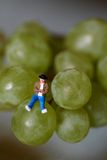 Miniature of a man sitting on the grapes Royalty Free Stock Photography