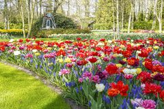 A miniature mill between green grass, birch trees and mixed flowers beds with Muscari botryoides and different colors tulips stock images