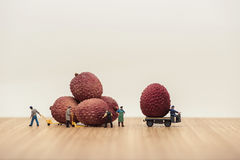 Miniature movers loading lychees on truck Royalty Free Stock Image