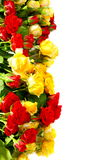 Miniature multicolored roses. Royalty Free Stock Images