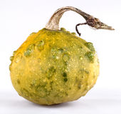 Miniature ornamental pumpkin Stock Image