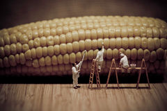 Miniature painters coloring corn on the cob Stock Photography