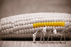 Miniature painters coloring corncob. Macro photo Royalty Free Stock Photos