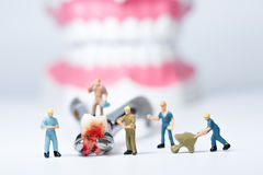 Miniature people clean tooth model Stock Photography
