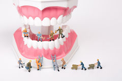 Miniature people clean tooth model Stock Photos