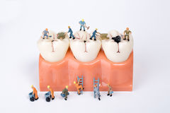 Miniature people clean tooth model Royalty Free Stock Photo