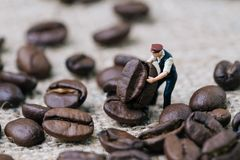 Miniature people figurine coffee professional worker holding roa. Sted coffee bean on gunny bag, selecting best aroma quality for manufacture production Royalty Free Stock Photo