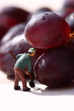 Miniature people picking red grapes D Royalty Free Stock Image