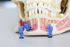Miniature people scientist at work with dental tooth model stock photos