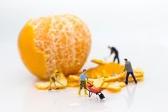 Miniature people : Workers are peeling orange peels. Image use for teamwork, business concept royalty free stock photos