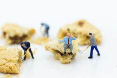 Miniature people : Workers was crushed cookies. Image use for bakery business concept Royalty Free Stock Photography