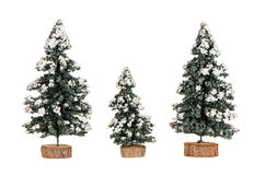 Miniature pine trees Stock Images
