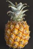 Miniature pineapple fruit Stock Photos
