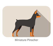 Miniature pinscher breed flat icon design Royalty Free Stock Image