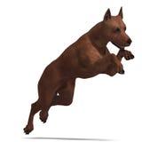 Miniature Pinscher Dog Stock Photo