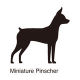Miniature Pinscher dog silhouette, side view, vector Royalty Free Stock Photo