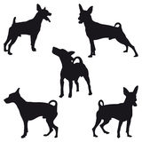 Miniature Pinscher. Five Miniature Pinscher black silhouettes Royalty Free Stock Photo