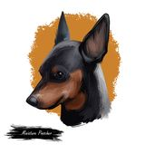 Miniature pinscher, German dog breed digital art illustration. Profile portrait of canine originated in Germany. Min pin. Hound, zwergpinscher type of animals royalty free illustration