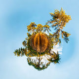 Miniature planet with pine forest Stock Photo
