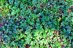 Miniature plant scene Royalty Free Stock Photos