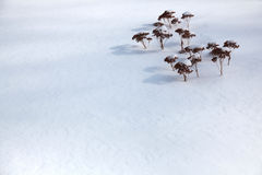 Miniature Plants in Snow Stock Images