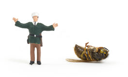 Miniature police officer guarding a crime scene - dead wasp Stock Photography