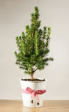 Miniature potted Christmas tree on the table Stock Images