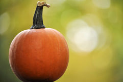 Miniature pumpkin Stock Photo