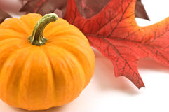 Miniature pumpkin. S with fabric fall leaves Stock Images