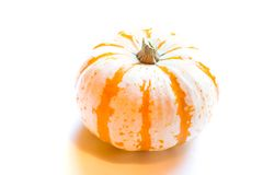 Miniature Pumpkin. Photo of miniature pumpkin on white background royalty free stock photography
