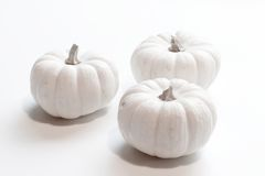 Miniature Pumpkin. Photo of miniature pumpkin on white background royalty free stock images