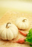 Miniature pumpkin with carrots Stock Images