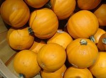Miniature Pumpkin, Cucurbita pepo Stock Images