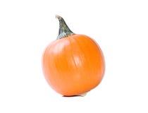 Miniature pumpkin on white background Stock Photography