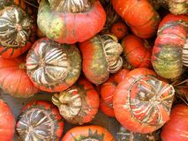 Miniature pumpkins Royalty Free Stock Photography