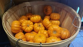 Miniature Pumpkins in a Basket Royalty Free Stock Images