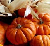 Miniature Pumpkins Stock Images