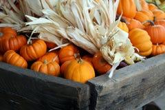 Miniature Pumpkins and Miniature Maize Stock Photography