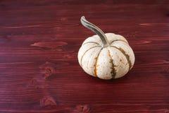 Miniature Pumpkins Royalty Free Stock Photos