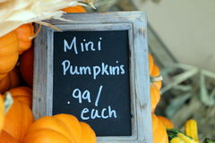 Miniature Pumpkins for Sale Royalty Free Stock Image