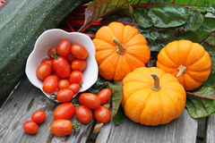 Miniature  pumpkins,swiss chard,cherry tomatoes,zucchini Royalty Free Stock Photos