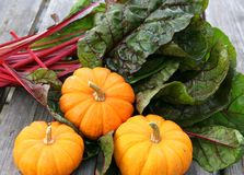 Miniature pumpkins and swiss chard Royalty Free Stock Images