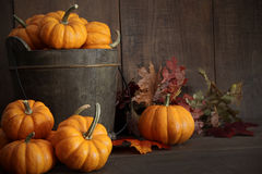 Miniature pumpkins on wooden Royalty Free Stock Images