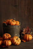Miniature pumpkins on wooden table Royalty Free Stock Photography