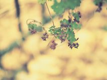 Miniature purple and deep wine colored flowers royalty free stock photo
