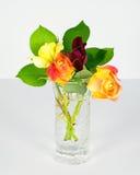 Miniature Rose Buds Stock Photos