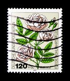 Miniature-rose, Welfare: Garden Roses serie, circa 1982. MOSCOW, RUSSIA - NOVEMBER 23, 2017: A stamp printed in Berlin shows Miniature-rose, Welfare: Garden Stock Images